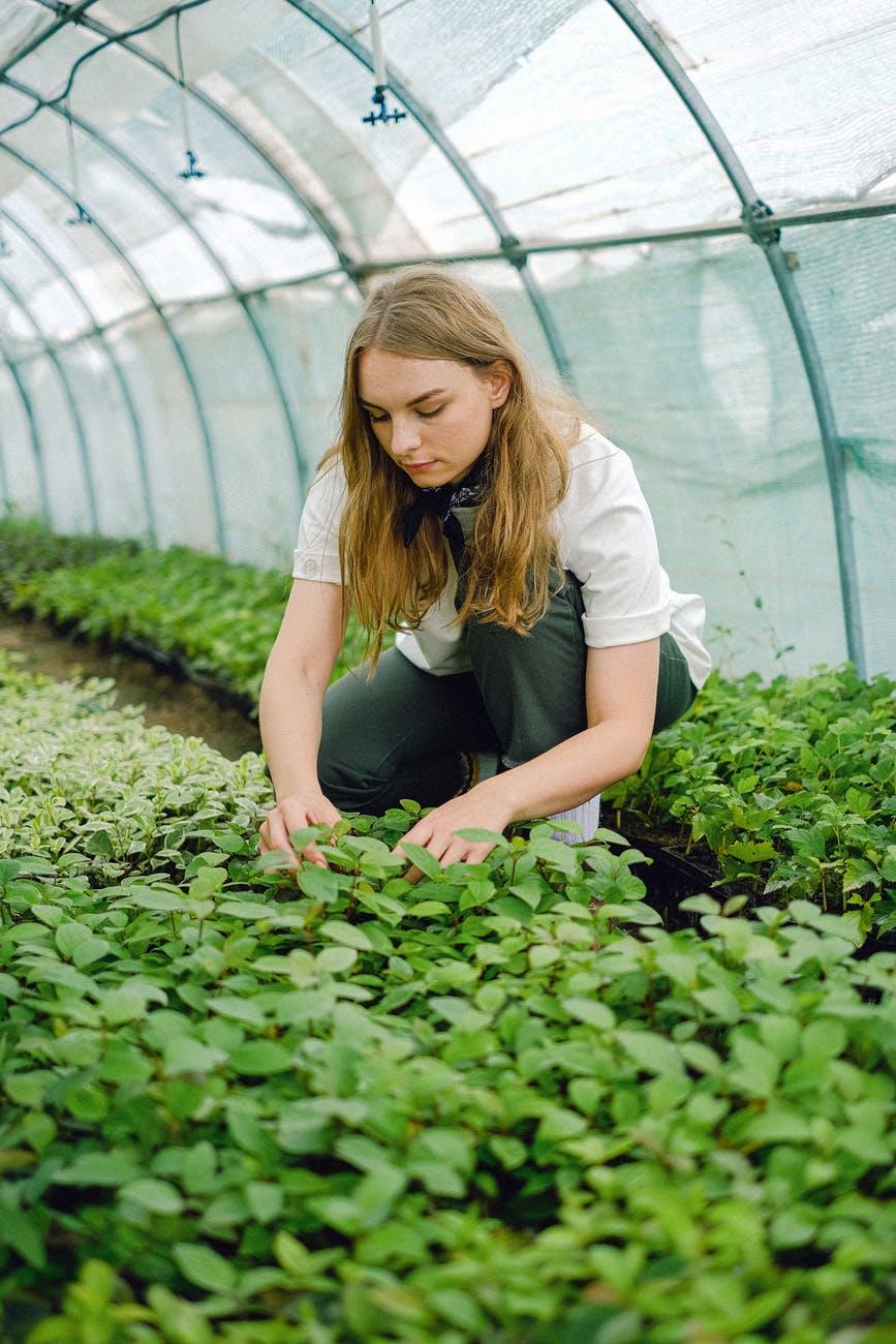 Check Plants
